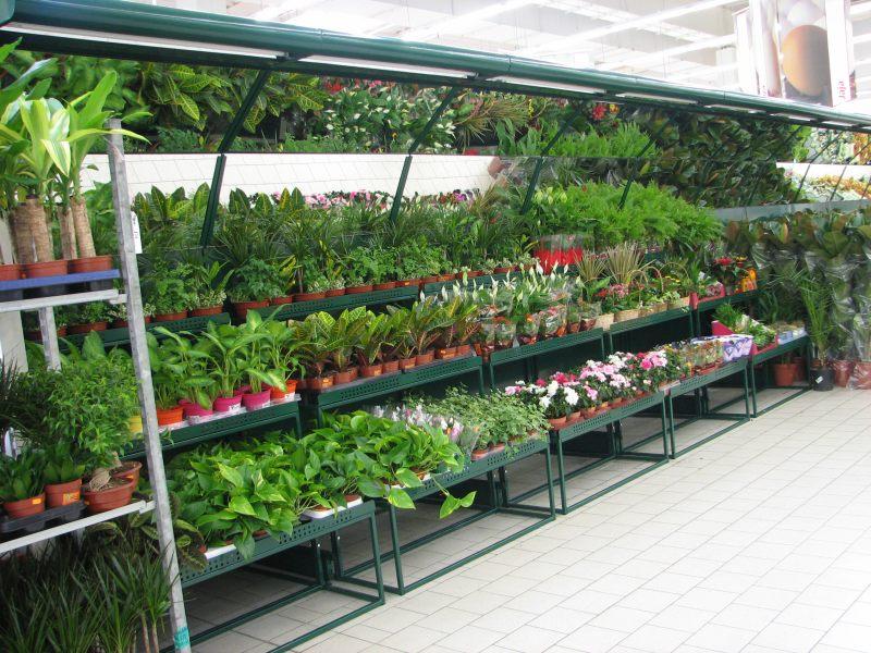 Plantes - rayonnages pour la branche maison et jardin - m....